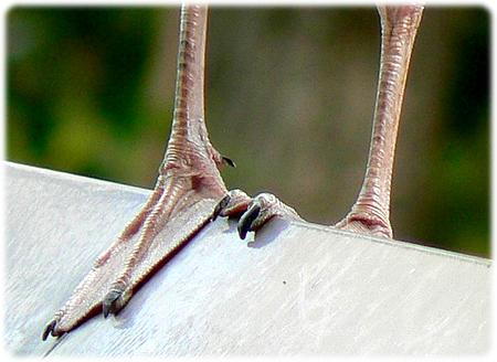 Et par flade på en tagryg