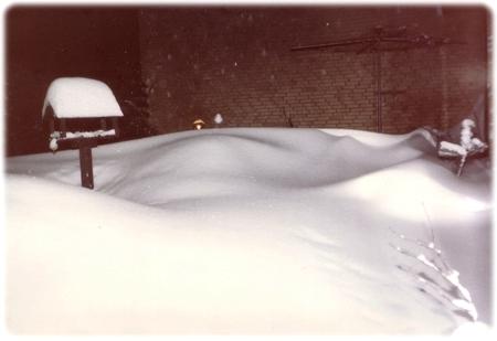 JuleSne1981