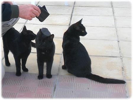 tre_sorte_katte3l.jpg