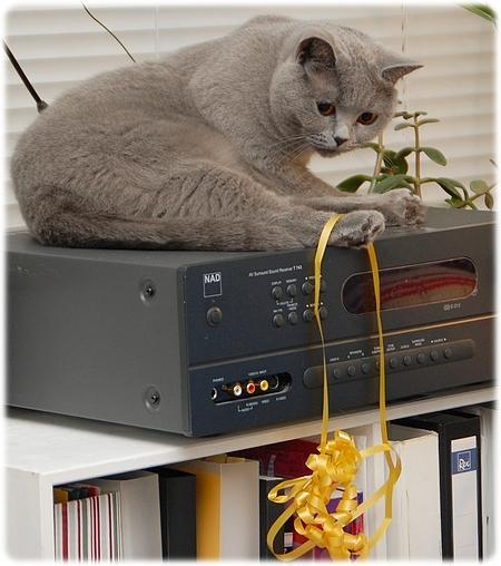 Katteleg