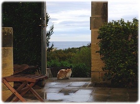 Kattens udsigt